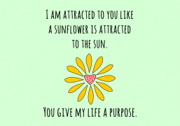 attracted-to-you-like-sunflower-to-sun-1.png