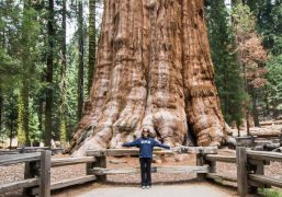 general-sherman-tree-perspective-pic.jpg