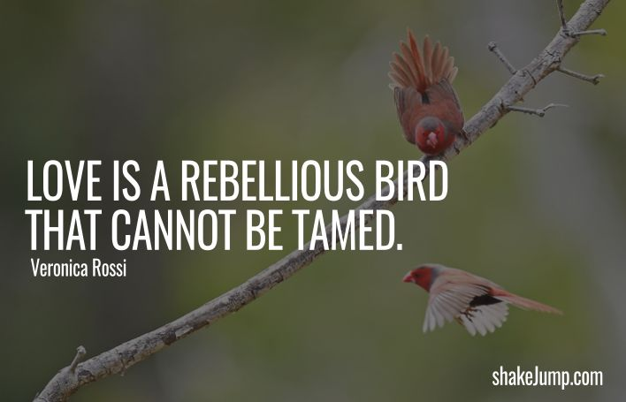 Love is a Rebellious Bird and Cannot be Tamed - quote