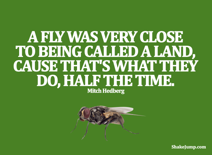 Mitch Hedberg - Funny quote on flies
